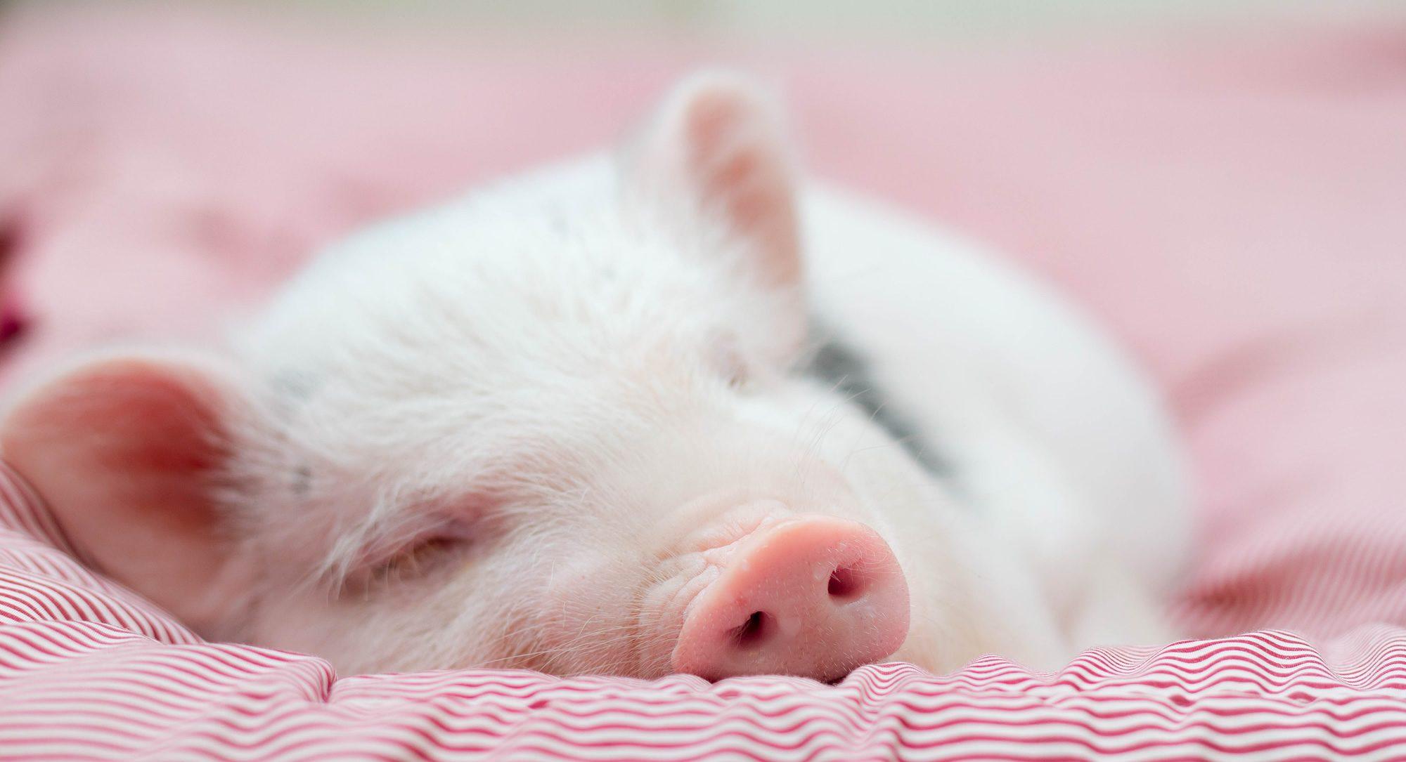 Animal Justice Foundation (AJF)